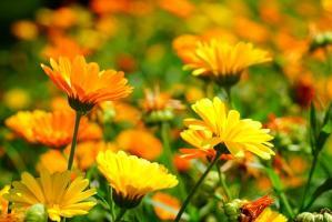 Odpowiednie stanowisko kluczem do pięknej rośliny