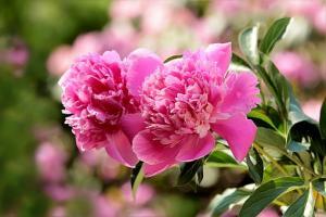 Francuski ogród regularny – rośliny pod kontrolą
