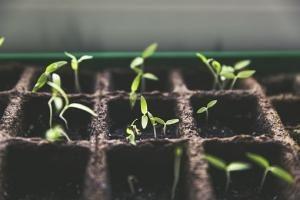 Rośliny odnajdują ludzkie uczucia