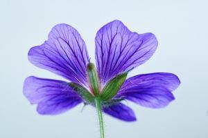 Kwiaty symbolem olbrzymich interesów