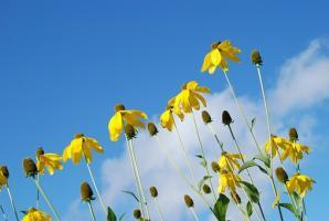 Smutno zacznij zajmować się pielęgnowaniem roślinek