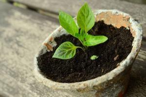 Strumienie pomysłem na ożywienie ogrodu