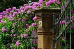Ogród widziany okiem kamery