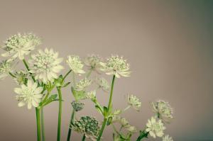 Zielony ogród zimową porą