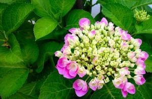 Świeże warzywa z własnego ogródka